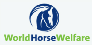 world horse welfare organisation