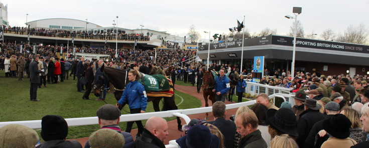 horses going around the parade ring at cheltenham racecourse