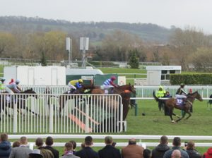 horses-jumping-cheltenham-final-fence