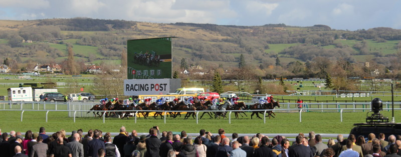 horses running up the hill at cheltenham racecourse