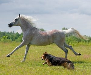 horse and a dog racing