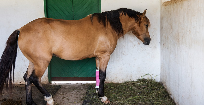 horse with bandaged leg