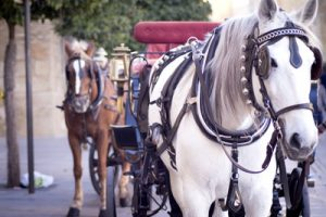 driving horse with blinkers on