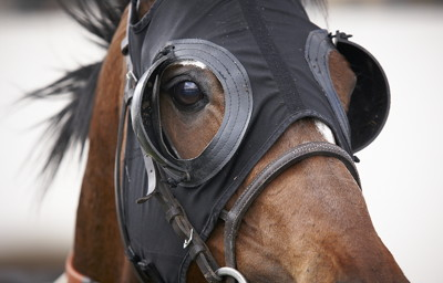 race horse with blinkers on close up